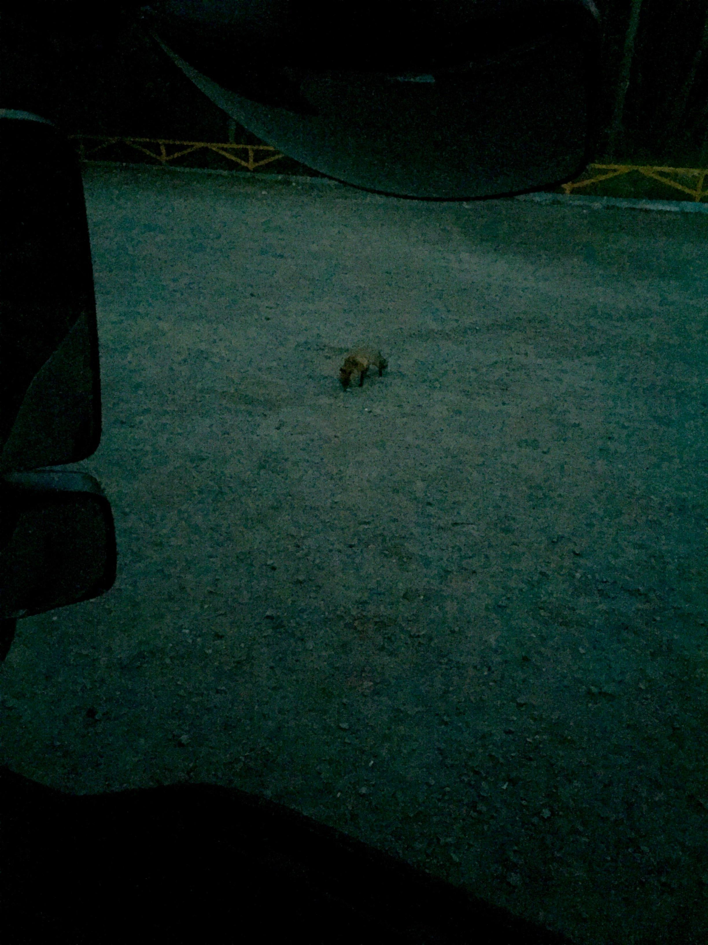 Noch ein Fuchs